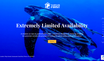Our Latest Web Design: Turtles First